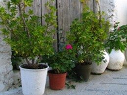 Landscaping_pots